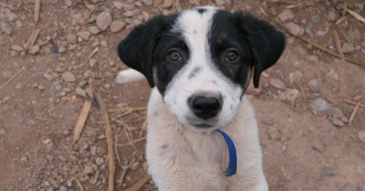 Bandit, il cucciolo di cane che ha inseguito una macchina pur di essere salvato (VIDEO)