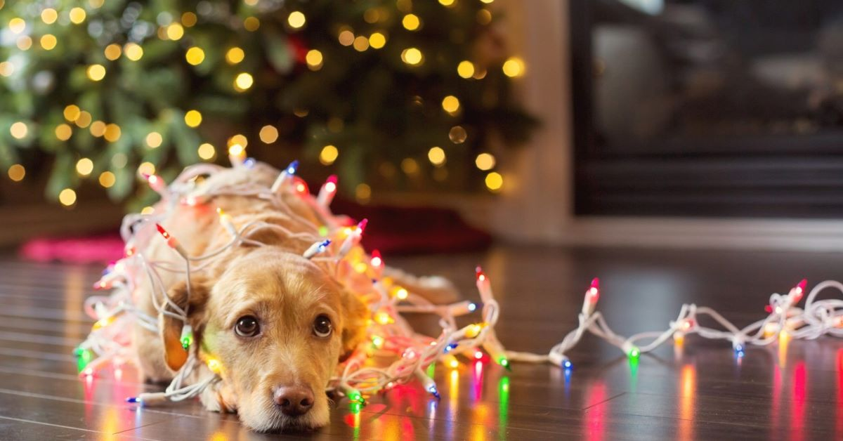 Cagnolini a Natale: foto dolcissime e tenerissime di cuccioli di cane, doni e luci