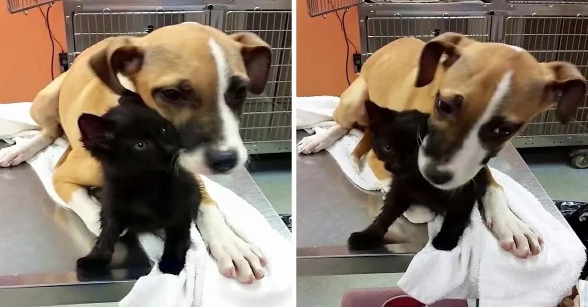 La meravigliosa storia di Camarin e Tomas: un cucciolo di cane e un gattino  uniti da un legame fortissimo (VIDEO)