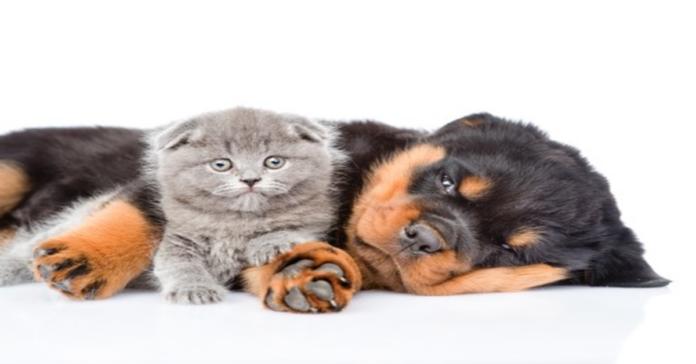 cucciolo e gattino