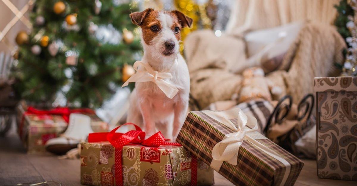 Cuccioli di cane al sicuro a Natale: tutte le precauzioni per preparare casa al meglio