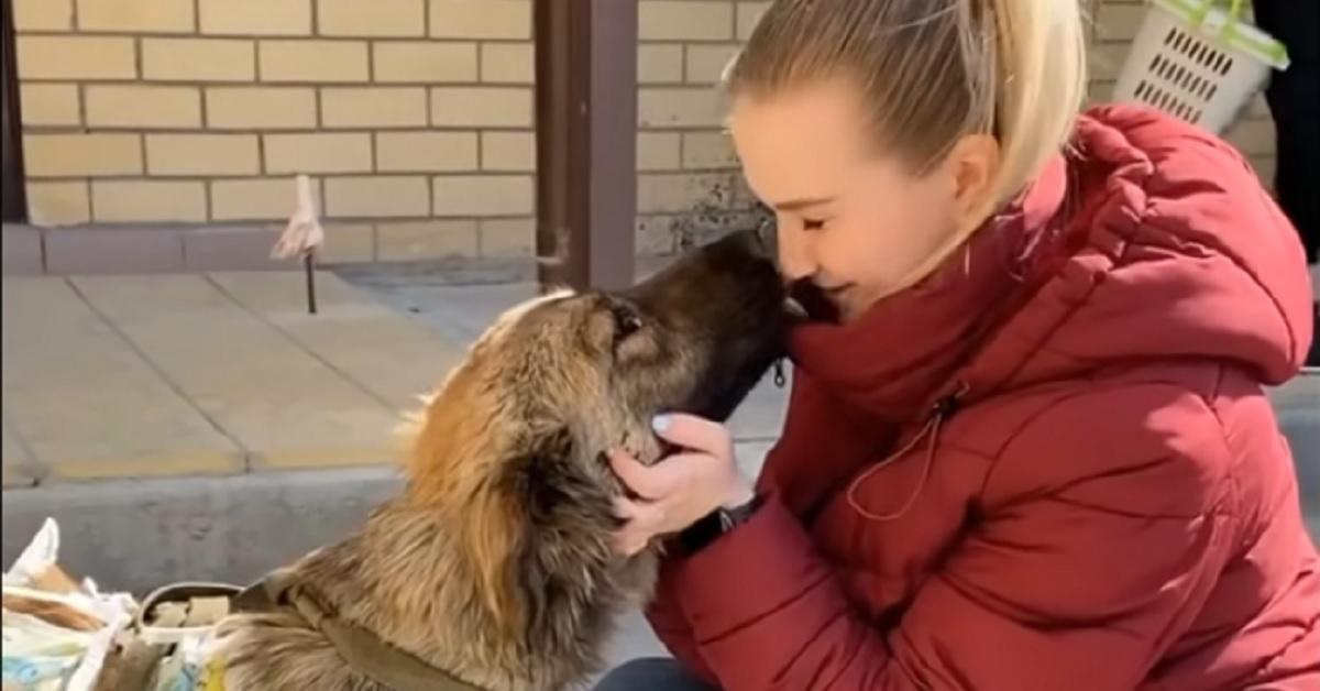 Cucciolo di cane randagio maltrattato trova una famiglia (VIDEO)