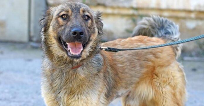 Cucciolo di cane randagio maltrattato