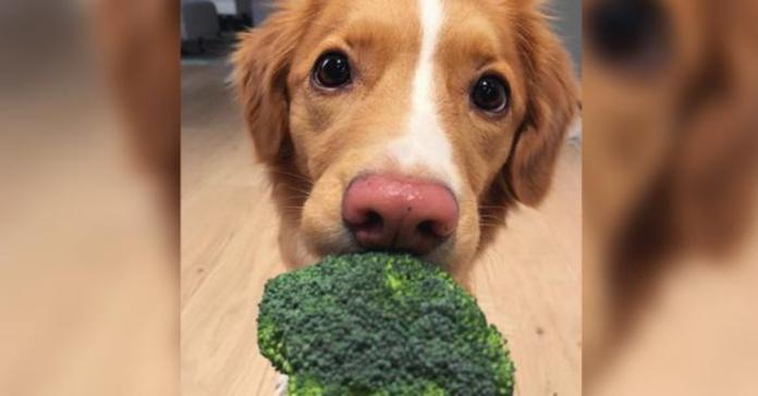 cane con broccoli