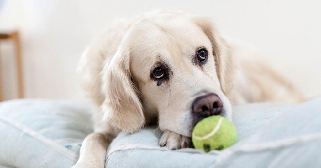Ecco perché il nostro cane può radicalmente cambiare umore in specifiche giornate