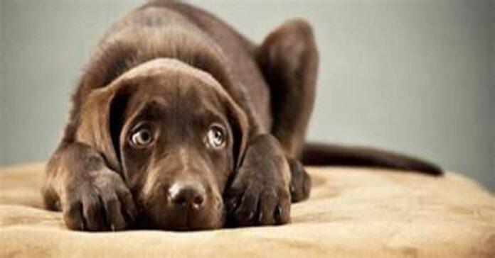 Ecco suoni e rumori che i cani non sopportano alcuni non sono per niente scontati