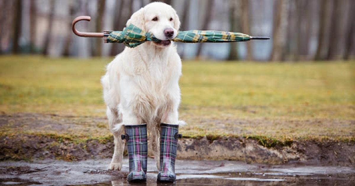 Far uscire un cane con la pioggia, è una buona idea?