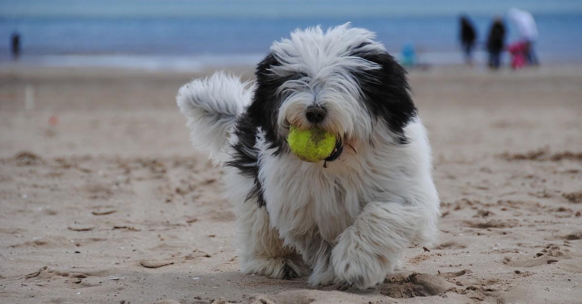 giochi che i cani adorano