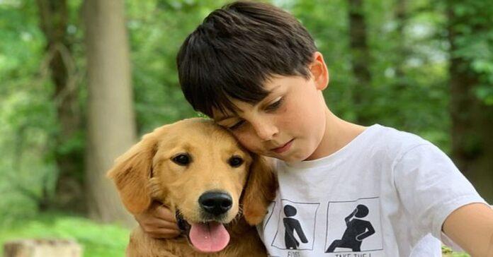 Huxley cucciolo Golden Retriever video