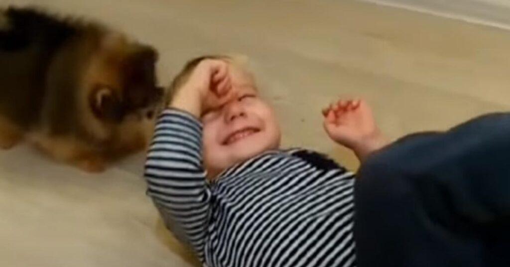 Cuccioli di Pomerania con un bambino