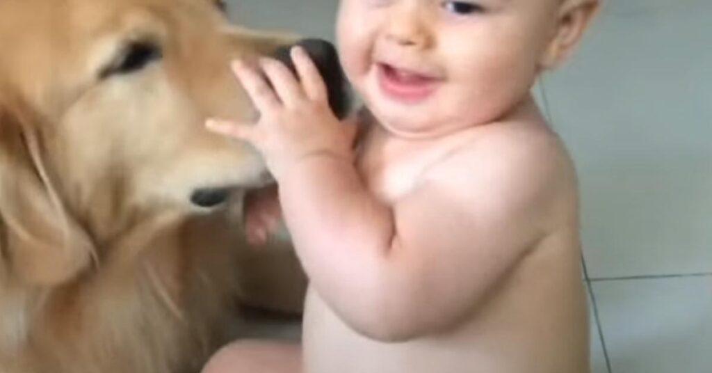 Il Golden Retriever non riesce a smettere di dare bacini ad un bambino (video)