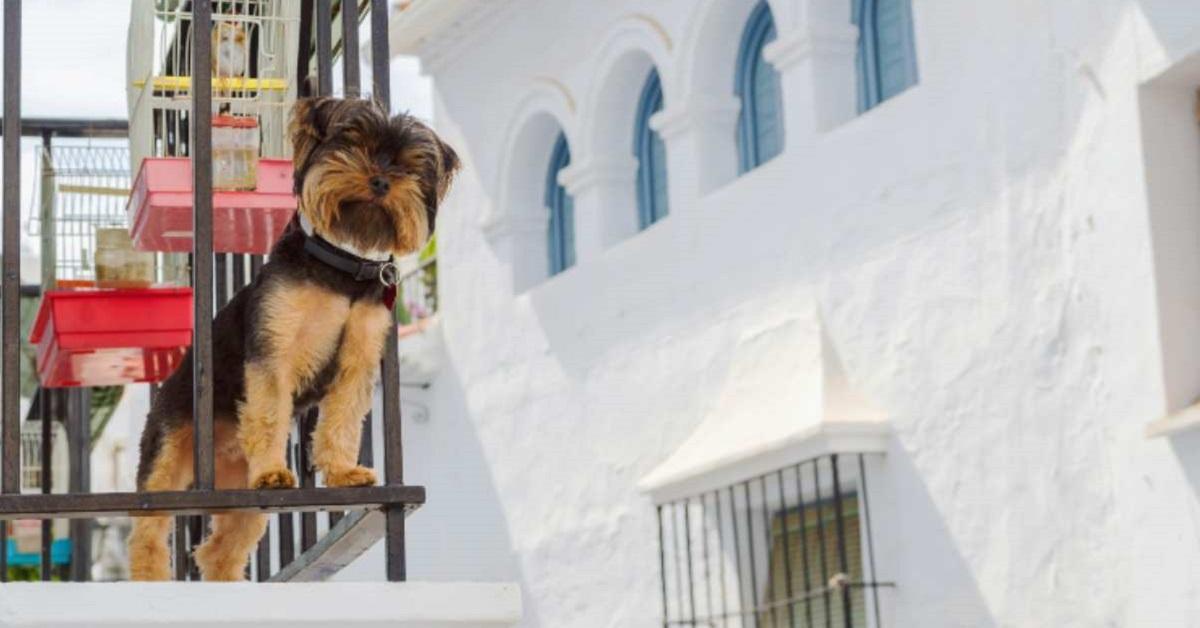 Il cane si può buttare dal balcone? Cosa sapere e come evitare problemi