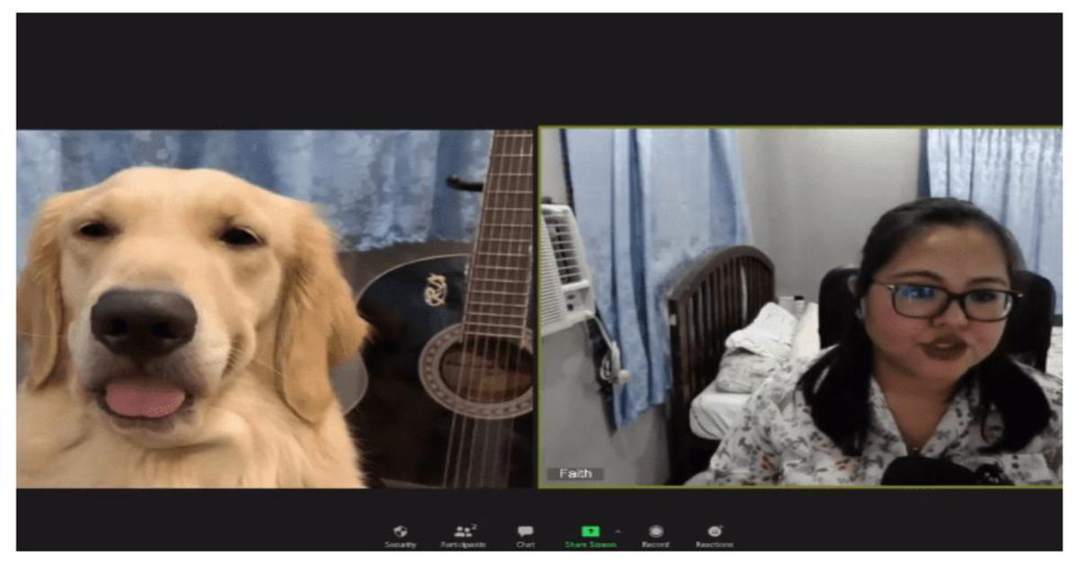 videochiamata con Golden Retriever