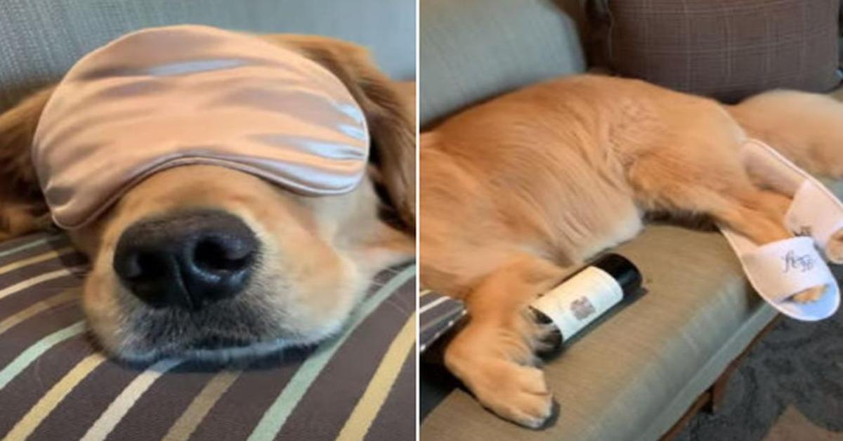 Insolito! Un cucciolo di cane dorme con mascherina, pantofole e una bottiglia di vino sotto la zampa (VIDEO)