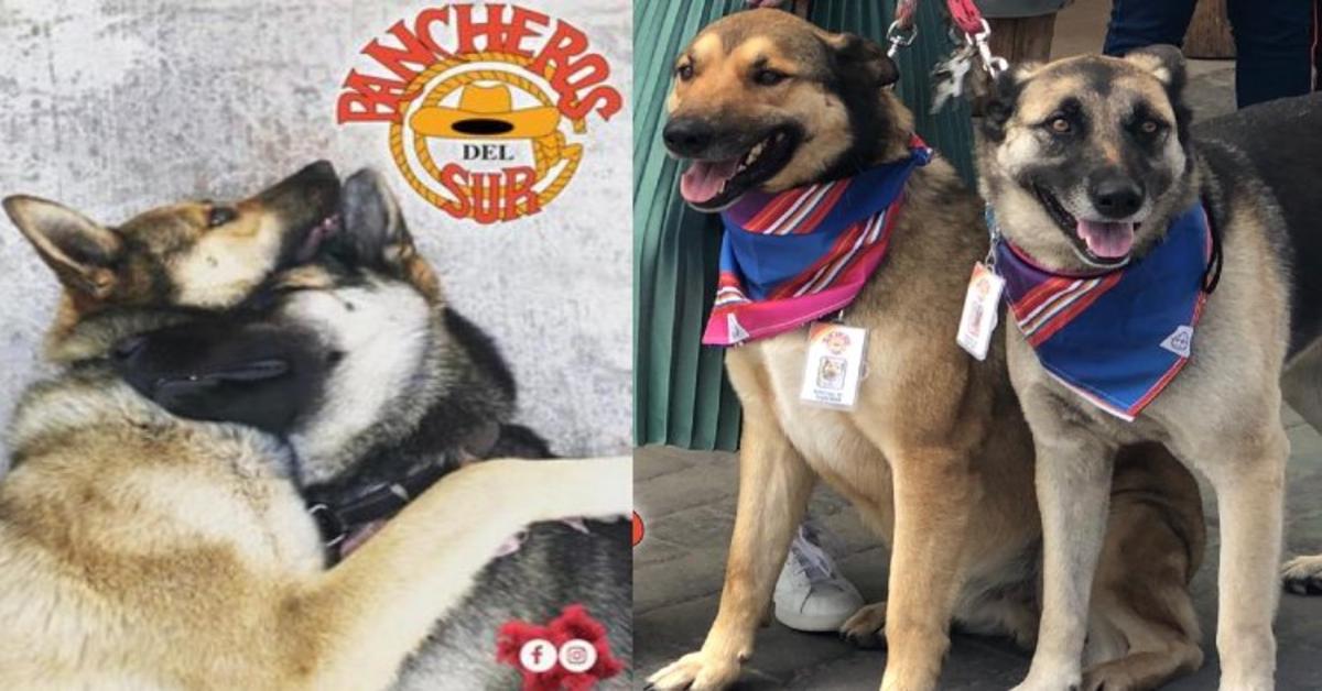 Costilla e Adobada: i cuccioli di cane che lavorano in un ristorante in Messico (VIDEO)