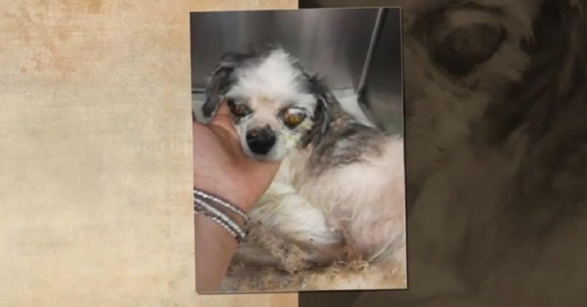 La nuova vita di Peonia, la cagnolina abbandonata in una scatola piena di vermi (VIDEO)