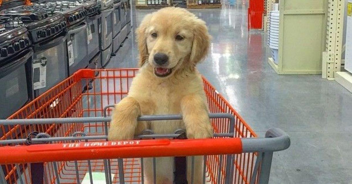 cucciolo fa la spesa