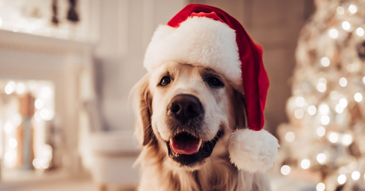 salute del cane a natale