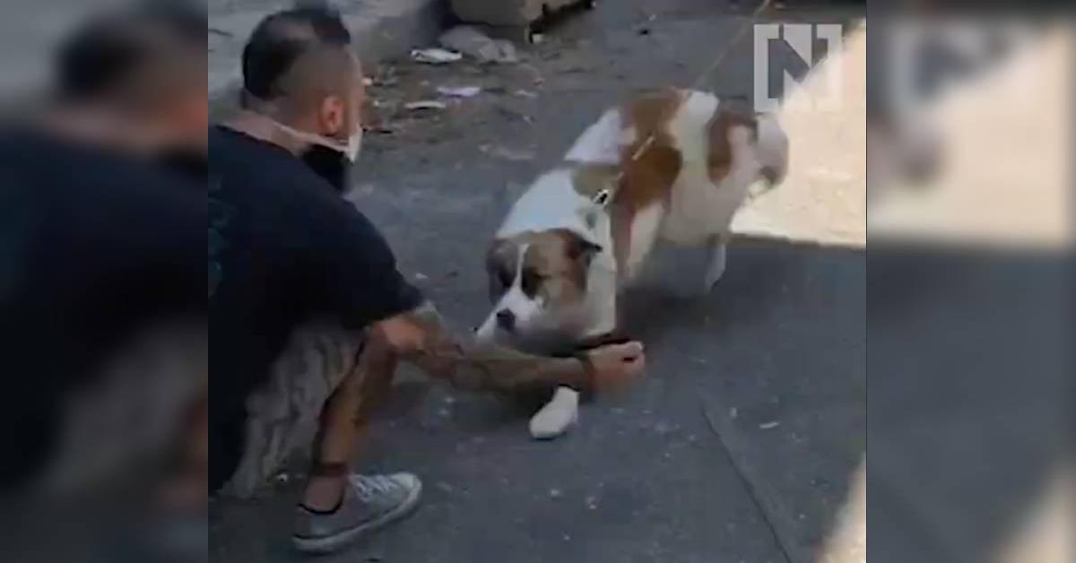 La gioia dei  cuccioli di cane che si erano perduto durante l'esplosione di Beirut quando ritrovano i loro padroni (VIDEO)