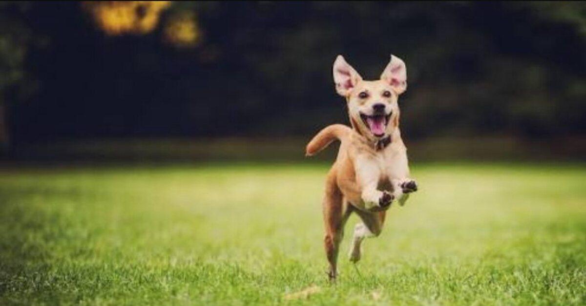 Svelato un alleato naturale importantissimo per il tuo cane con le zecche: ecco qual è