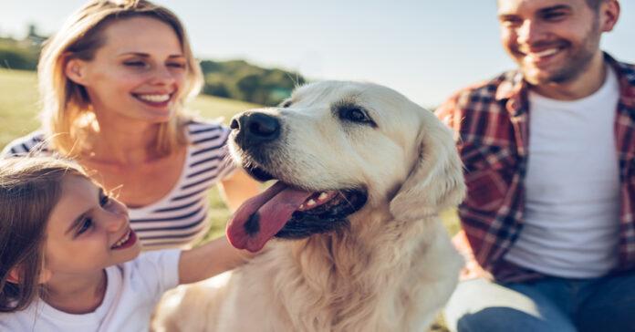 Svelato un alleato naturale importantissimo per il tuo cane con le zecche ecco qual è