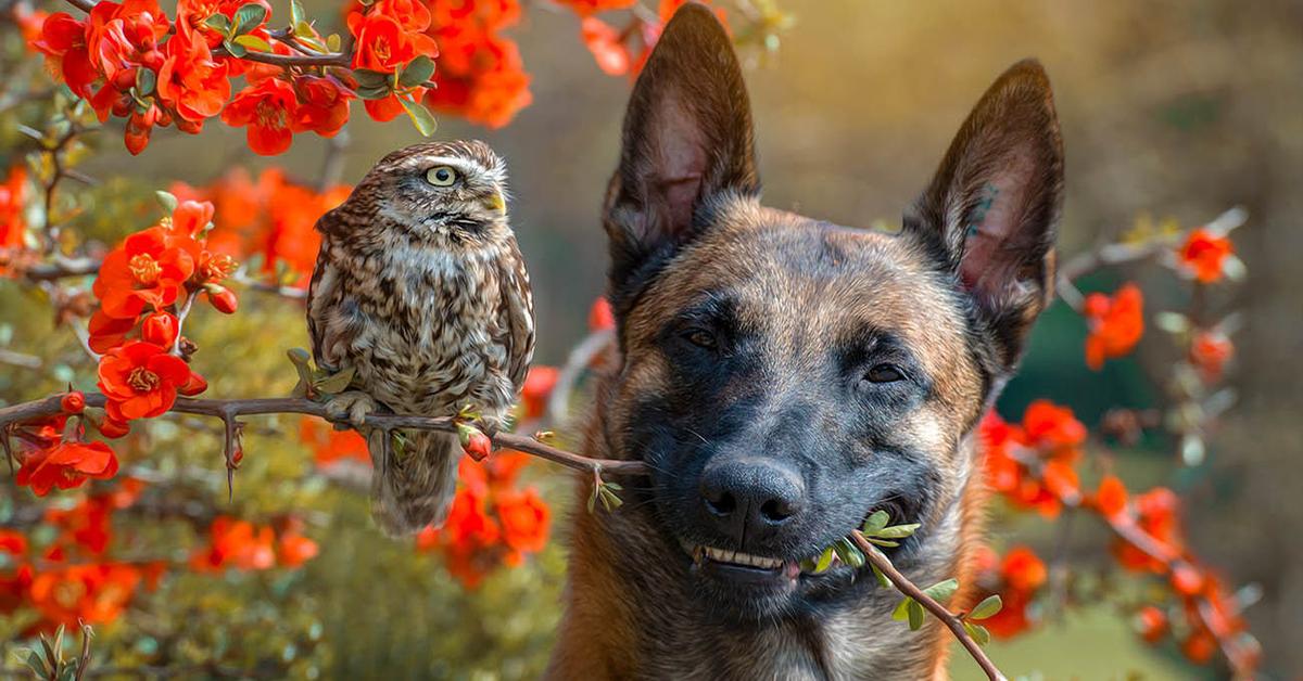 Poldi e Ingo con fiori