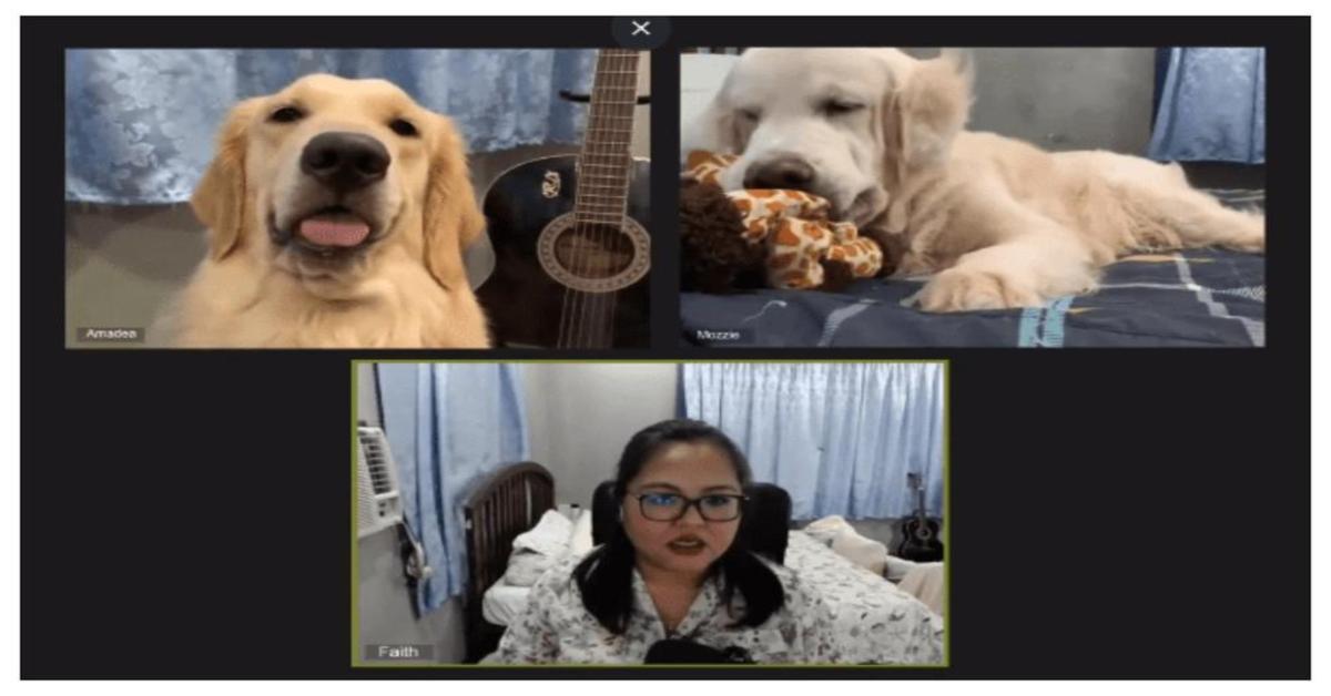 videochiamata con cani