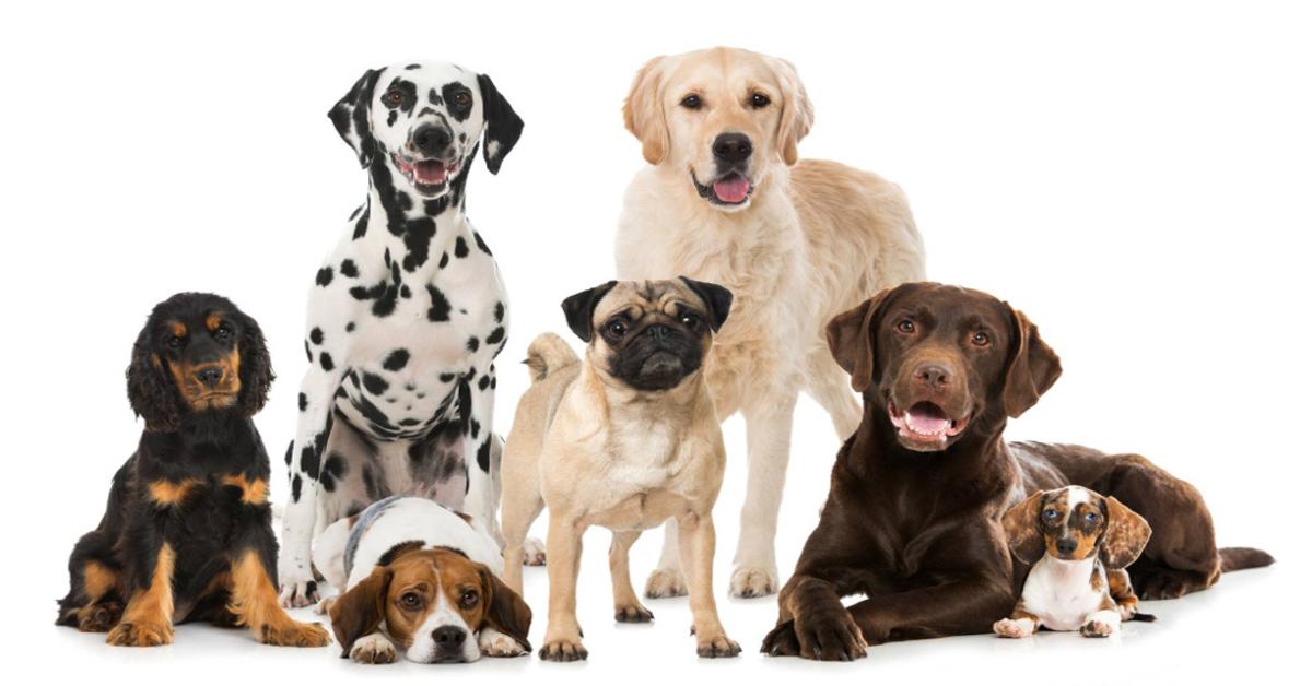 cani foto di gruppo