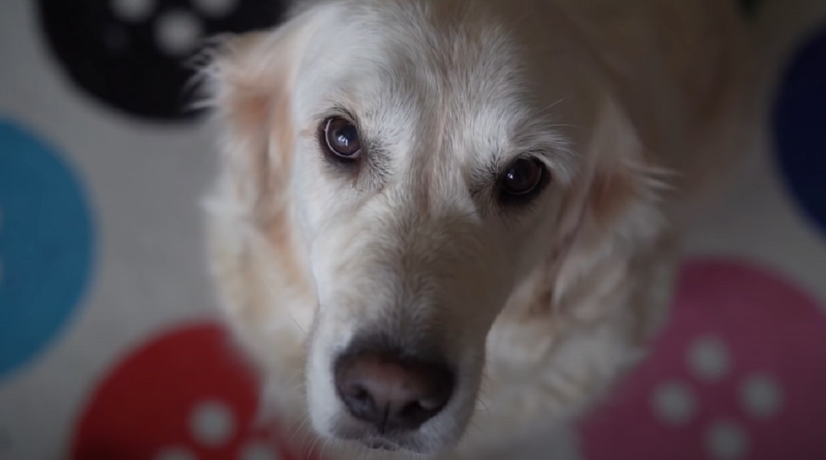 Attenzione a questi odori: il cane non li sopporta e potrebbe reagire in modi imprevedibili