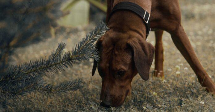 cucciolo cane odore
