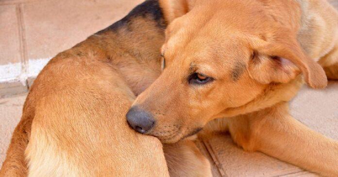 attenzione strano atteggiamento cane potrebbe pericoloso