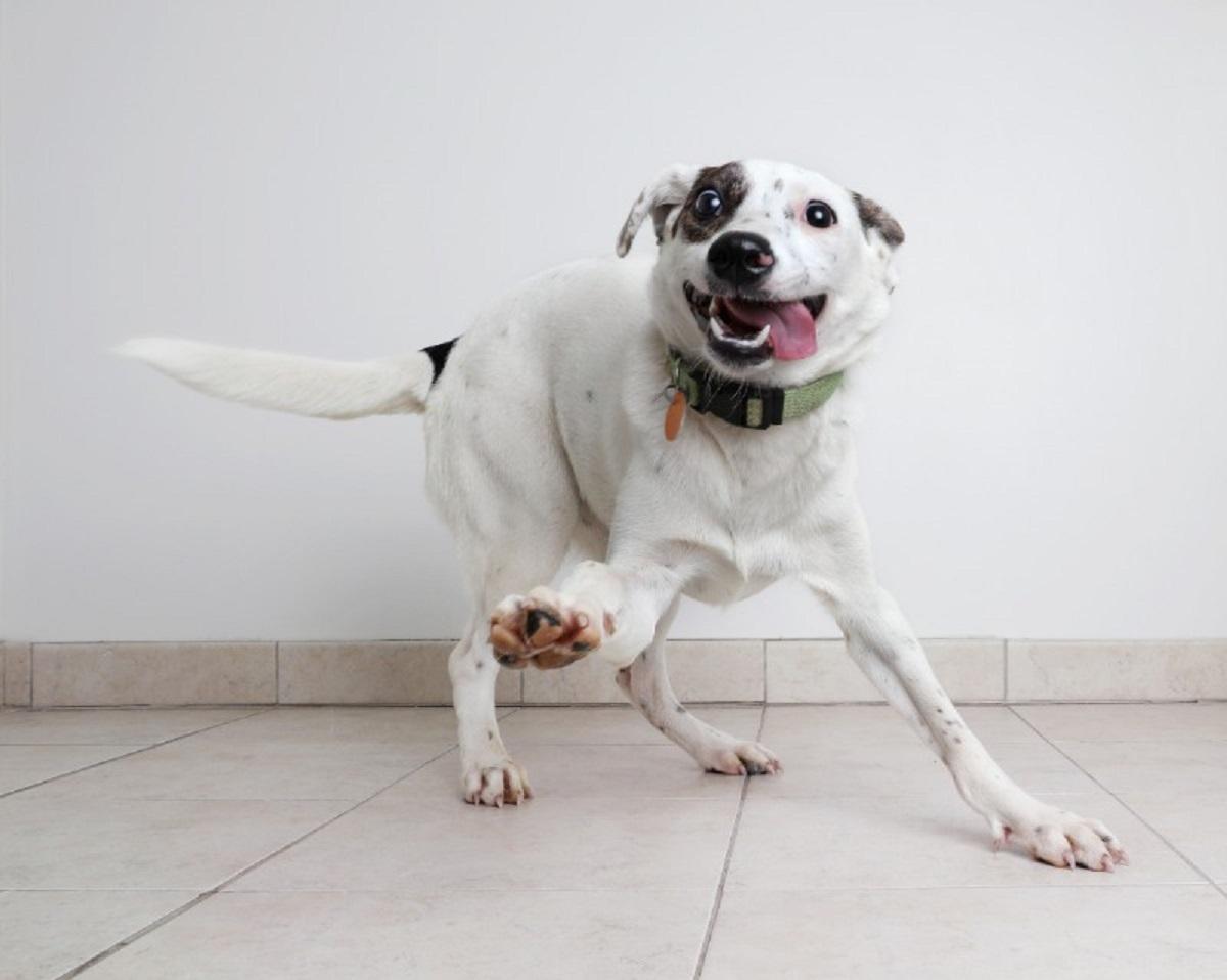 sguardo cane fisso non consigliato