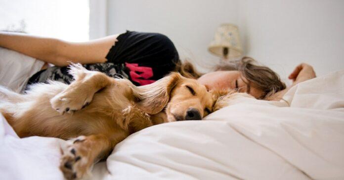 attenzione se dormi con cane queste posizioni sveli rapporto