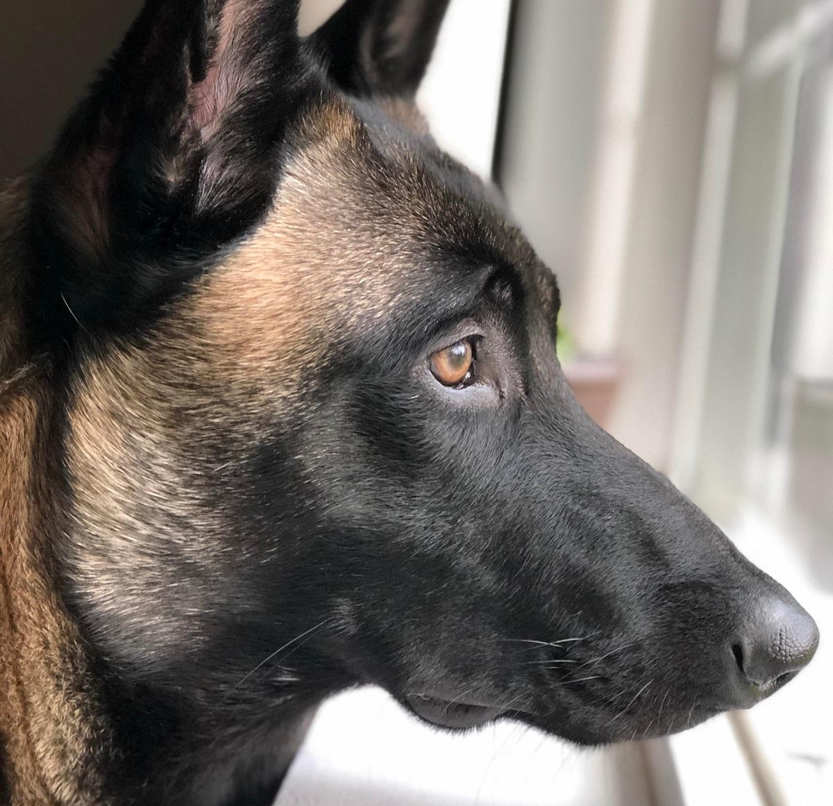 Attenzione, se la faccia del tuo cane si presenta così devi fare immediatamente qualcosa