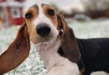 cucciolo cane nella neve