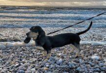 cagnolone al mare