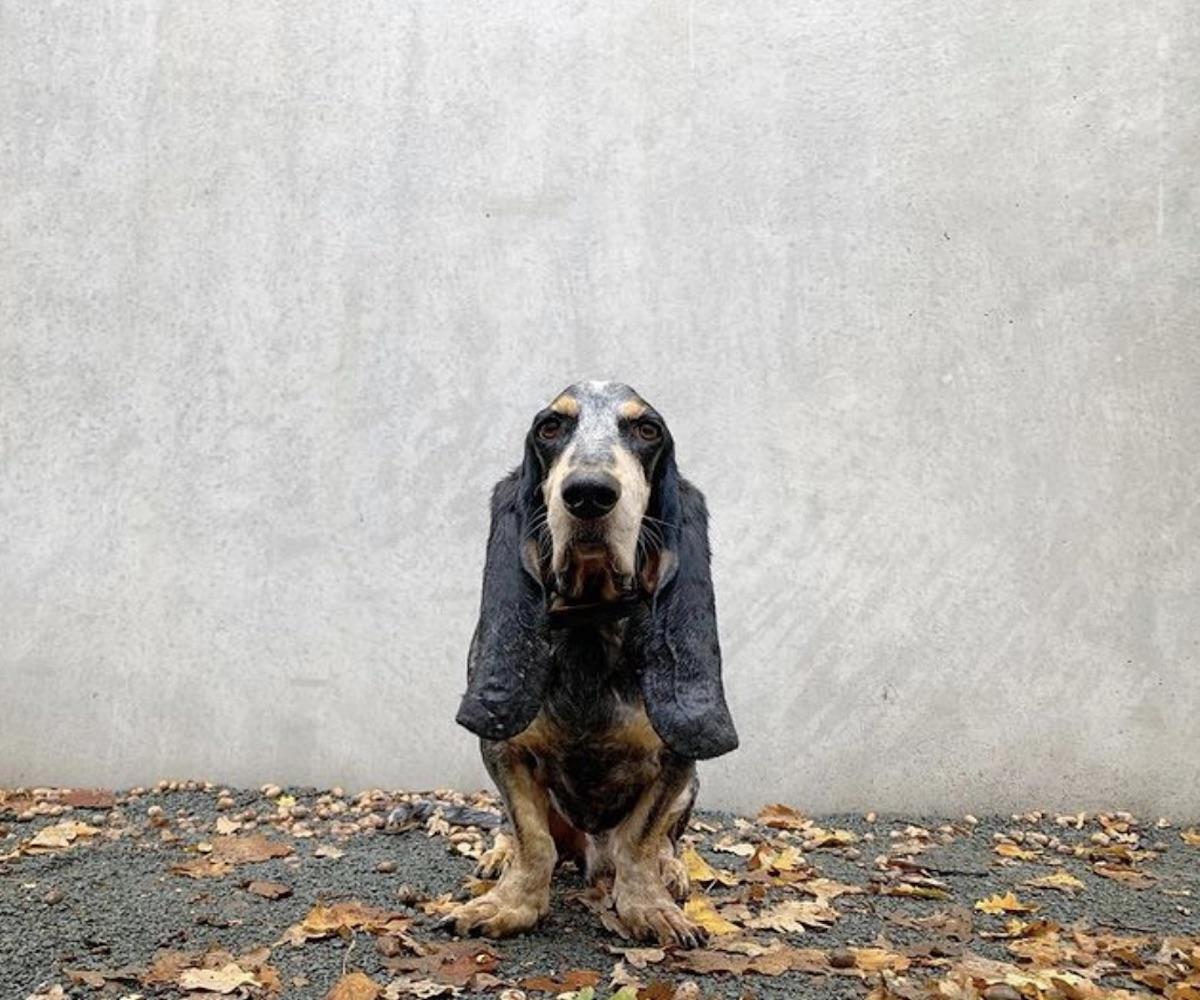 cagnolino in posa per foto