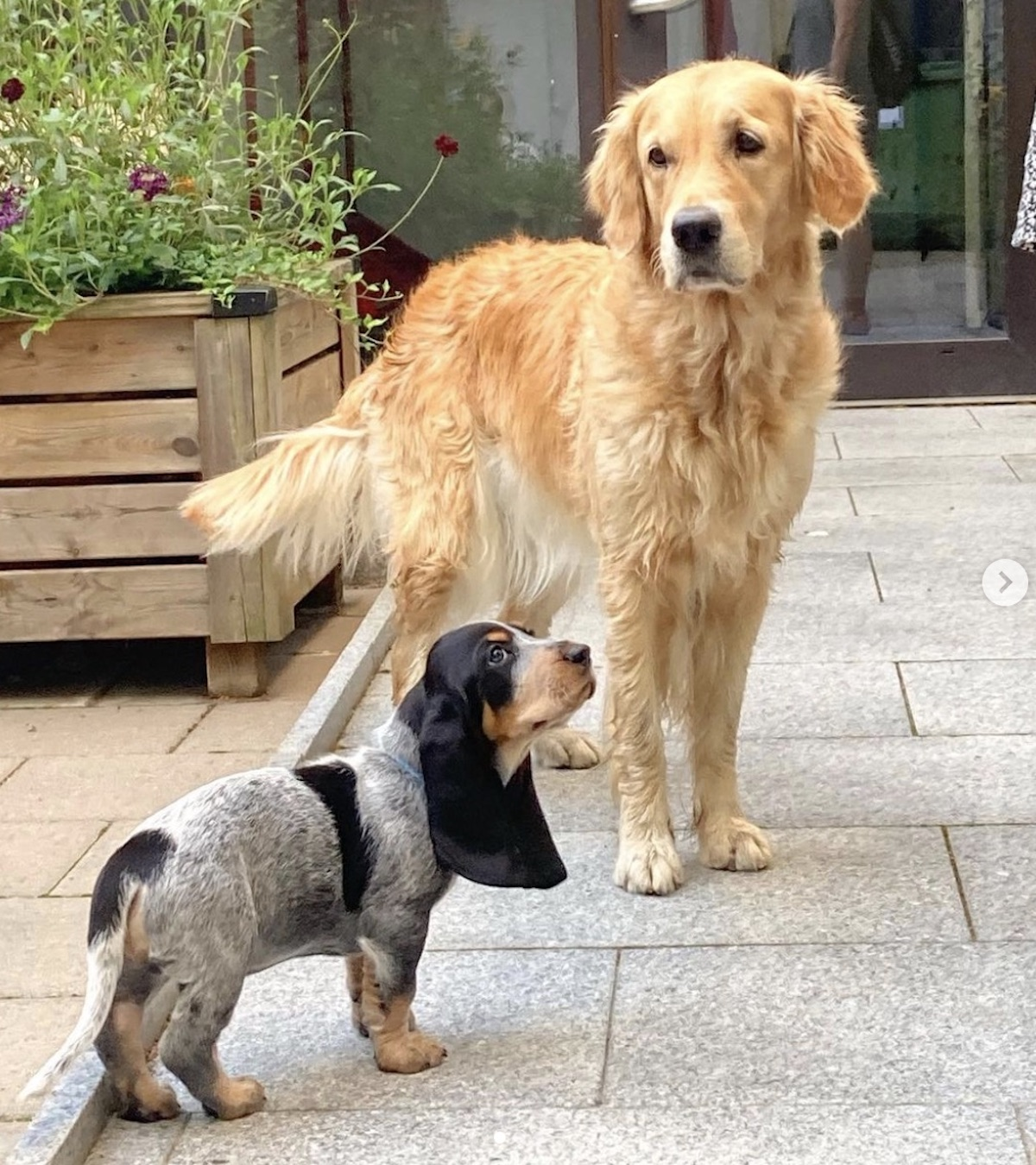 cani in compagnia