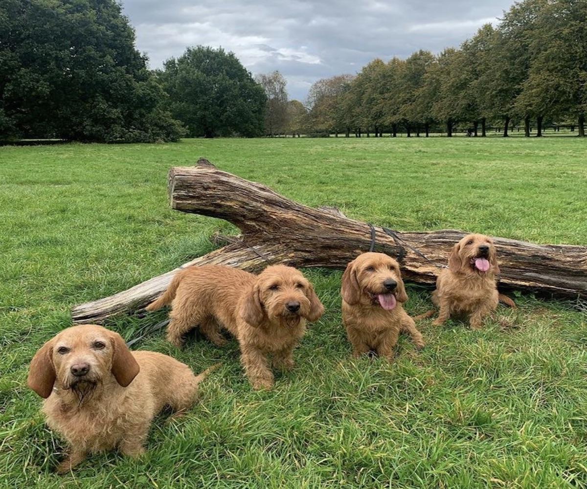 cagnolini in gruppo