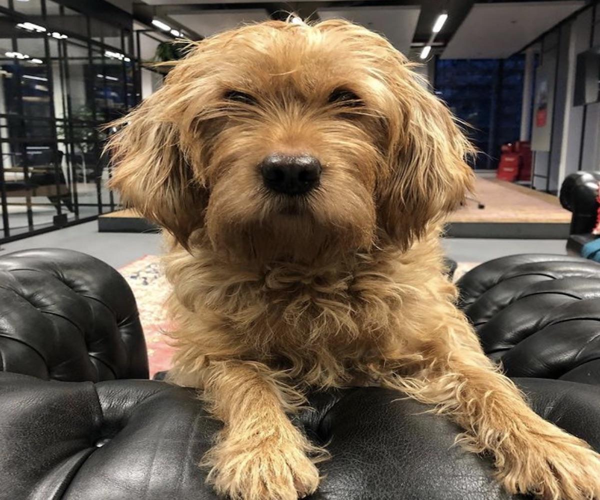 cagnolino sguardo dolce