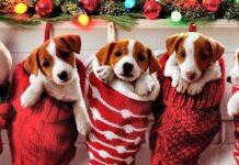 cagnolini dentro le calze di natale