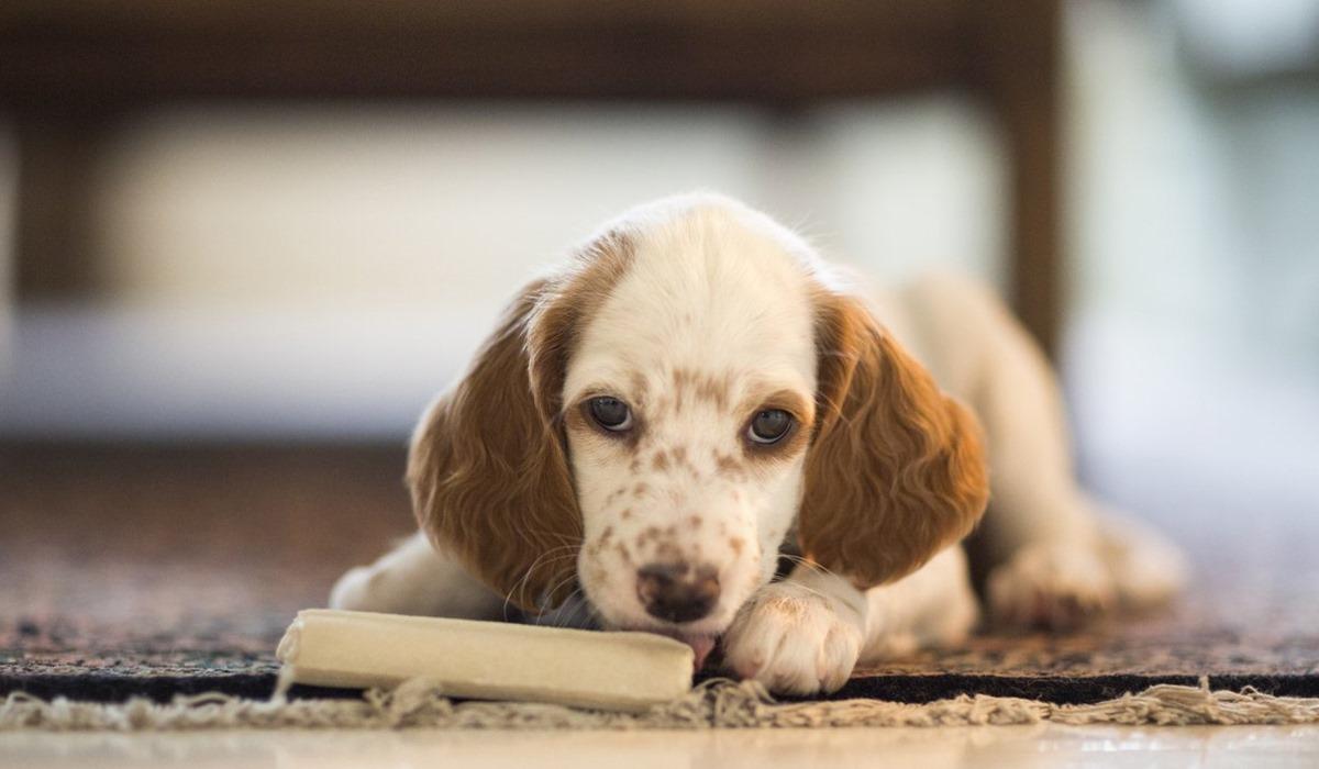 Calza natalizia per il cane: tante sorprese per fare felice Fido