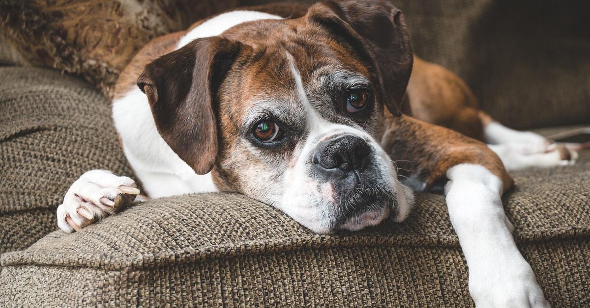 Cane anziano: come controllare il suo corpo e farlo vivere al meglio