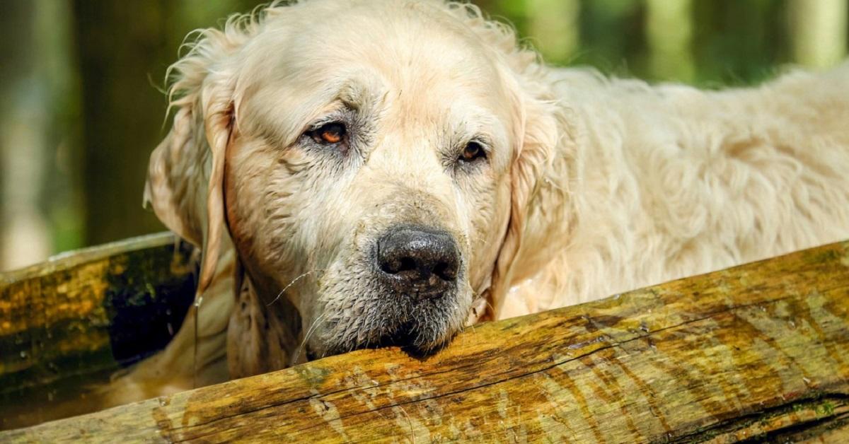 cane con il mantello bagnato