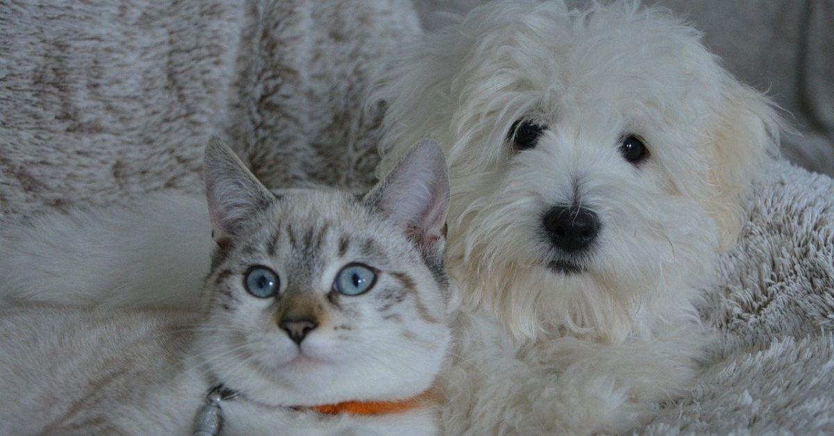Il cane è diventato come un gatto: perchè si è felinizzato?