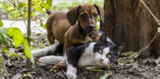 cane diventato gatto