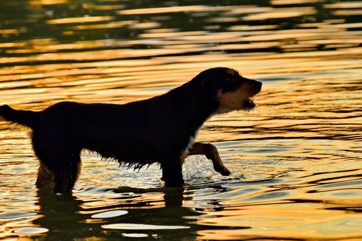 cane che esce dall'acqua