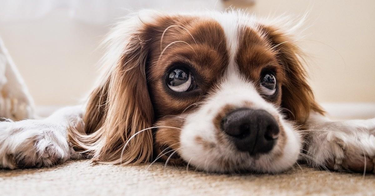 cane fa gli occhi dolci