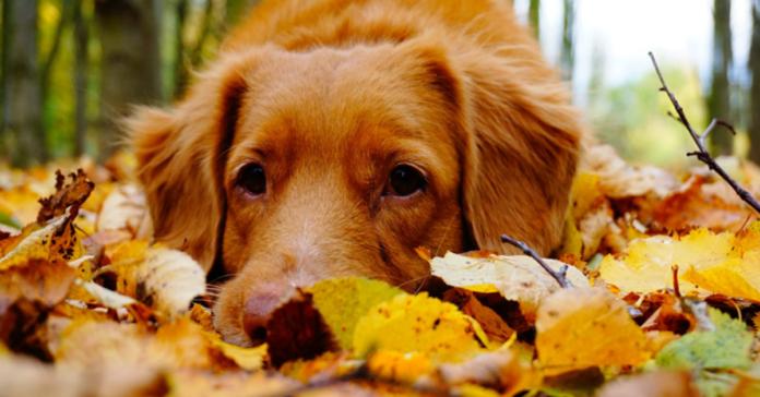cane con muso fra le foglie