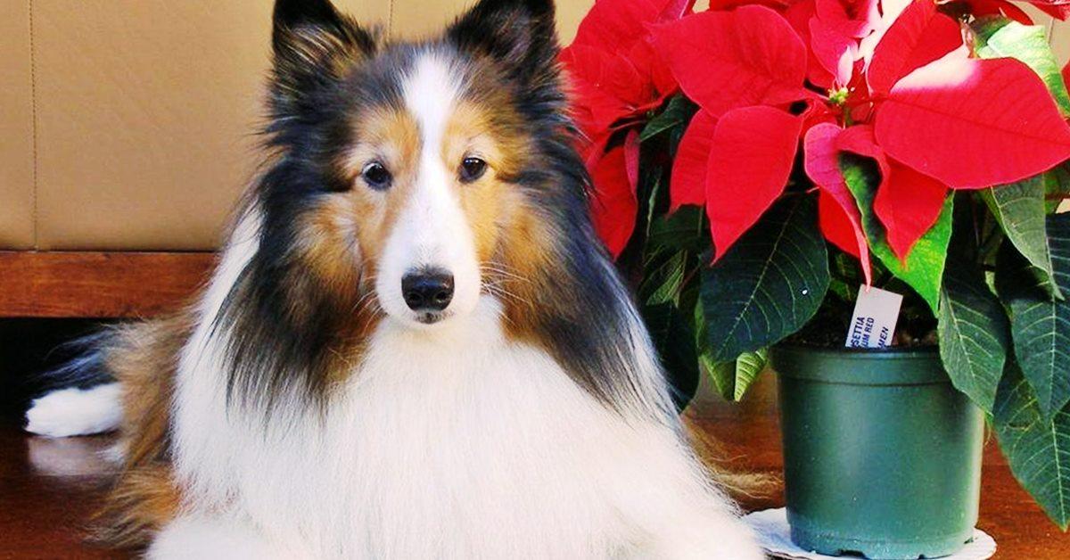 cane in casa a Natale